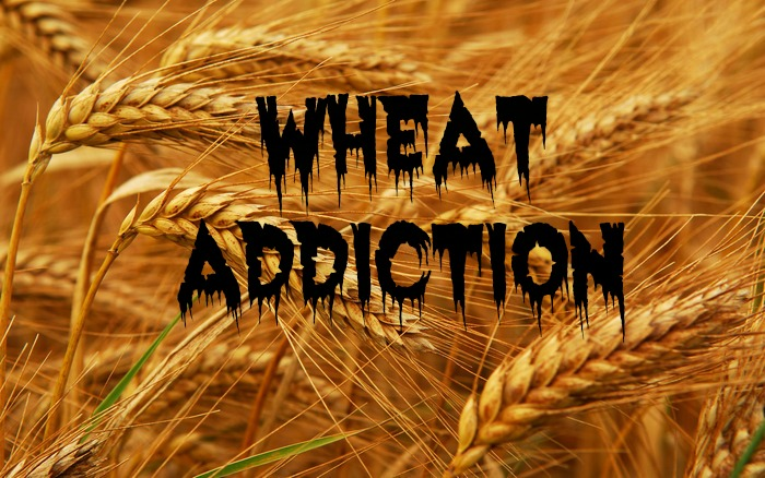wheat-addiction