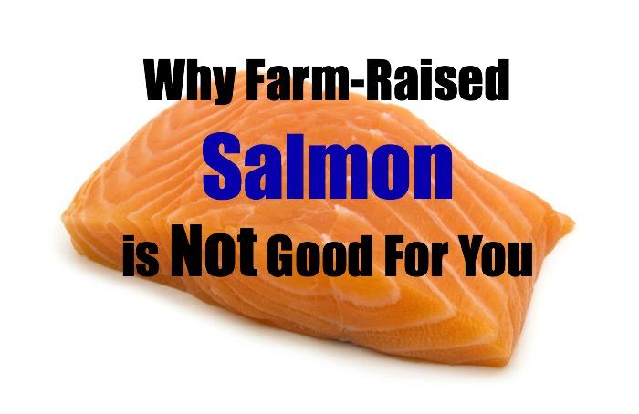 farm raised or wild salmon essay 4 things you need to know to choose good salmon  said arruda, wild salmon tends to be red and farm-raised tends to  chris hardwick in her essay.
