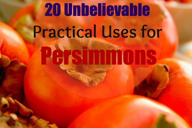 uses-for-persimmon